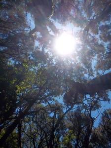 """Im """"Regenwald"""" von La Gomera"""