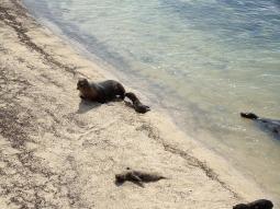 Mein Begrüssungskomitee am Lobo-Playa