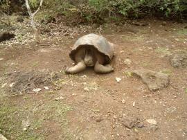 Die Schildkröte die mich zum Weinen bringt