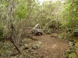 Schildkrötenübergangsweg - ganz ohne Streifen