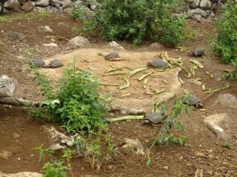 Mittagessen bei den 5jährigen Schildkröten