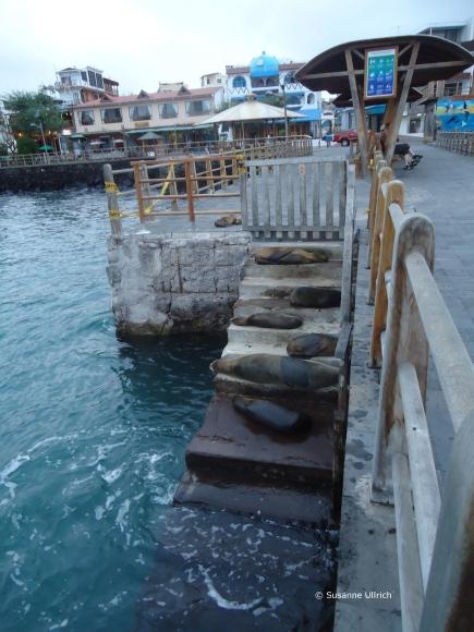 Am Pier von Puerto Ayora, Santa Cruz