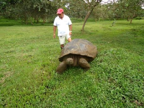 Cesar, der Schildkrötenflüsterer