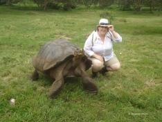 Im Hochland von Santa Cruz auf Du und Du mit den Riesenschildkröten