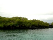 Mangroven allüberall