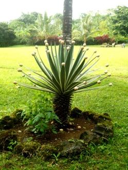 Kaktus mit Eiern - vielleicht eine moderne Art des Eierbaums zu Ostern?