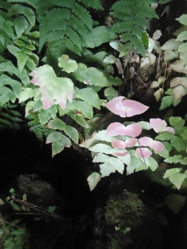 Zarte Pflanzen am Tunnelein- und -ausgang