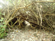Im Mangrovendschungel