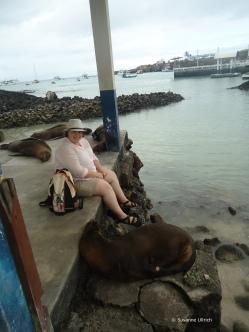 Zwischen Seelöwen am Pier von Puerto Ayora