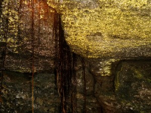Goldschimmer in der Cueva de Sucre