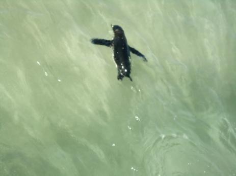 Schnelle Burschen diese Pinguine