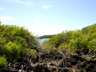 Blick zwischen Mangroven auf den Pazifik