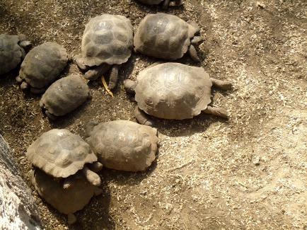 Entspannter Schildkrötennachwuchs im Breeding Center