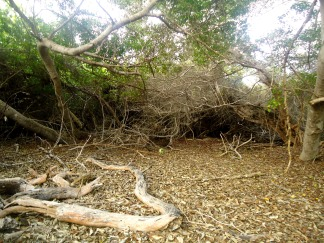 Dichtes Mangrovengestrüpp