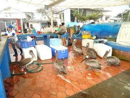Viel los am Fischmarkt