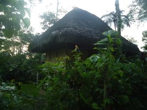 Die Cabanas sind versteckt mitten im Dschungel