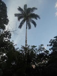 Riesige Bäumen ragen zwischen den Cabanas auf