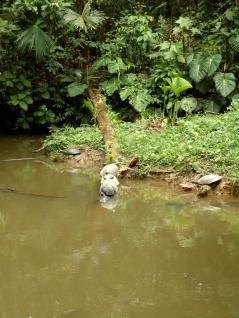 Wasserschildkröten im AmaZOOnico - nicht zu vergleichen mit den Riesenschildkröten auf Galapagos