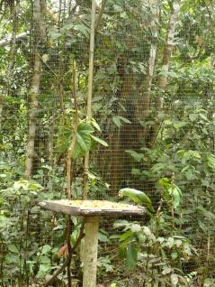Die Papageien und Aras machen ziemlich viel Krach ...