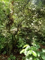 Spaziergang auf der Insel Anaconda