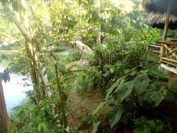 Blick auf die Schaukel am Fluss