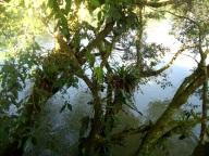 Rio Arajuno