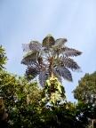 Eine Palme wie gemalt