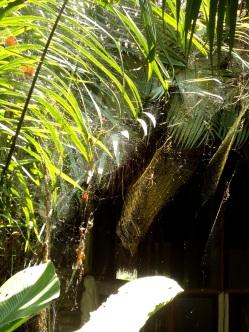 Stille Bewohner: die Spinnen