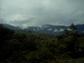 Letzter Blick auf den Regenwald