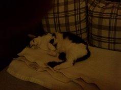 Ganz entspannt auf dem Sofa