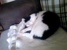 So sieht Katzenentspannung aus