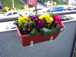 Frühlingsbepflanzung auf meinem Balkon