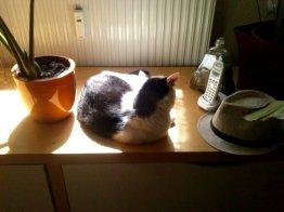Ein kleines Sonnenbad