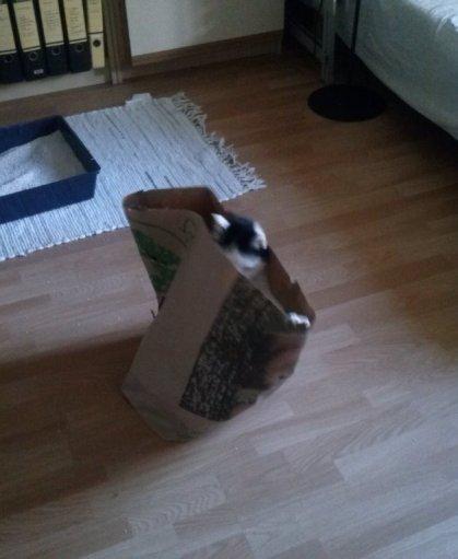 Die Katze im Sack respektive in der Tüte
