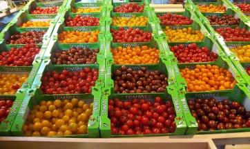 Nicht nur ein farbiger Augenschmaus diese Tomaten