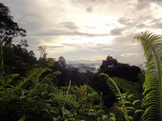 orang-utan-3-regenwald