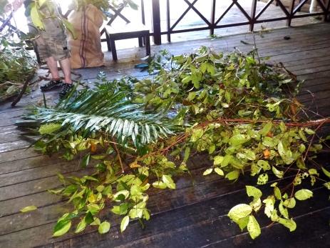 Dem Regenwald entrissen