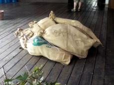 Laub und Äste in Jutesäcke verpackt für die Orang Utans