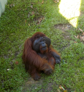 Aman im Matang Wildlife Centre