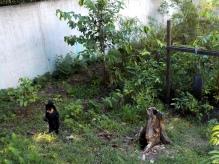 Malaienbären sind auf Borneo ebenfalls gefährdet