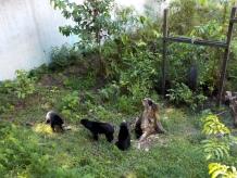 3 von 6 Sonnenbären/Malaienbären