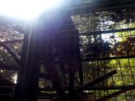 Leider schlecht getroffen: ein Binturong