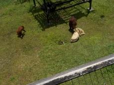 Gleich kommen die neugierigen Affen zusammen