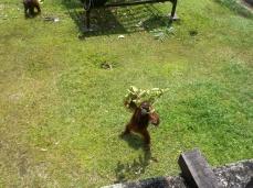 Ich weiß zwar nicht wie, aber Tasha erklärt, dass dieser Affe mit dem Ast ausbrechen will und auf unsere Hilfe hofft