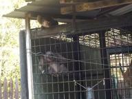 Ein traumatisierter Gibbon und ein ausgebüchster Makake