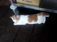 Darf man auch anfassen: Eine der putzigen kleinen Katzen