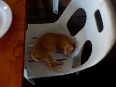 Ausnahmsweise mal schlafend - sonst war der Kleine verdammt aktiv