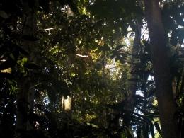 Unser Busfahrer entdeckt einen Orang Utan im Wald