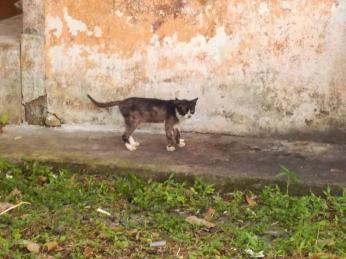 Erst am 2. Tag in Kuching sehe ich die erste lebende (und leicht räudige) Katze - ausgerechnet in der angeblichen Stadt der Katzen