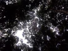 Wenn ich eine supertolle Kamera hätte, könntet Ihr hier die Nasenaffen sehen, die ich beobachten konnte